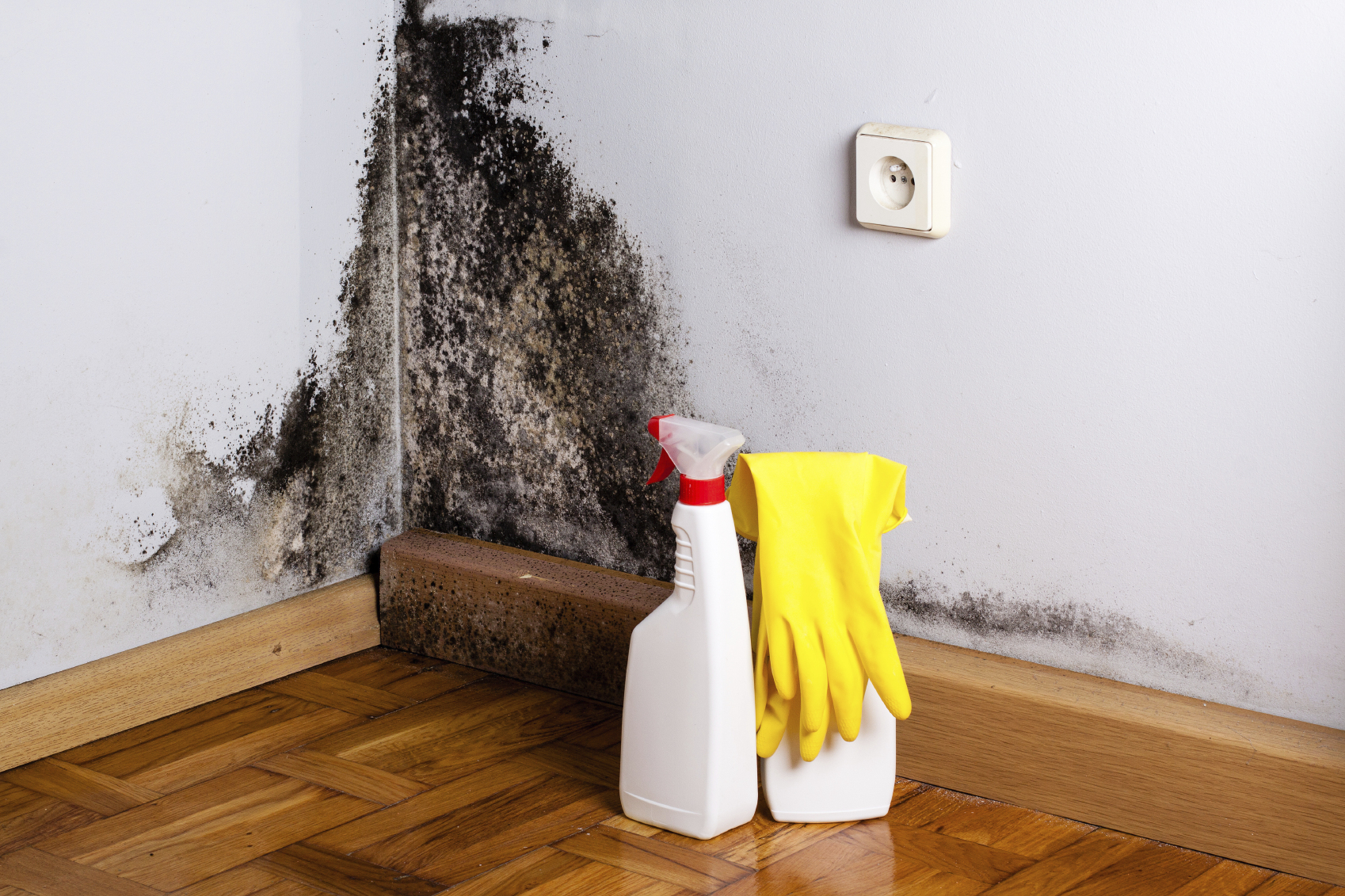 svamp i lejlighed
