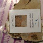 MycoMeter Surface skimmelsvamp (7)