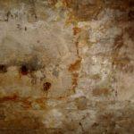 Skimmelsvamp i væg (2)