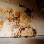 Skimmelsvamp i kælder (3)