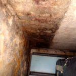 Skimmelsvamp på kældervæg