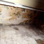 Skimmelsvamp på kældervæg (4)