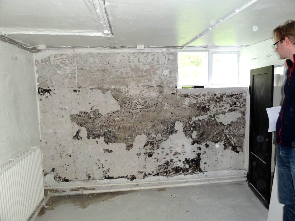 Skimmelsvamp på kældervæg (7)