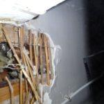 Skimmelsvamp på loftet