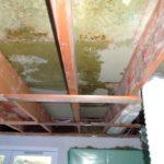 Skimmelsvamp på loftet (2)