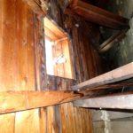Skimmelsvamp på loftet (3)