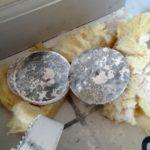 Test for skimmelsvamp i hus (2)