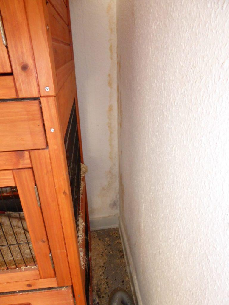 Skimmelsvamp-boligforening