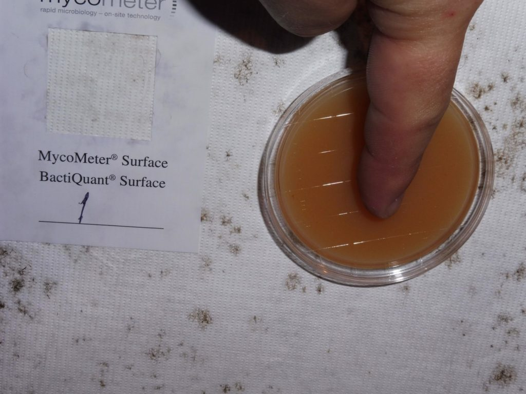 Skimmelsvamp-test-undertag