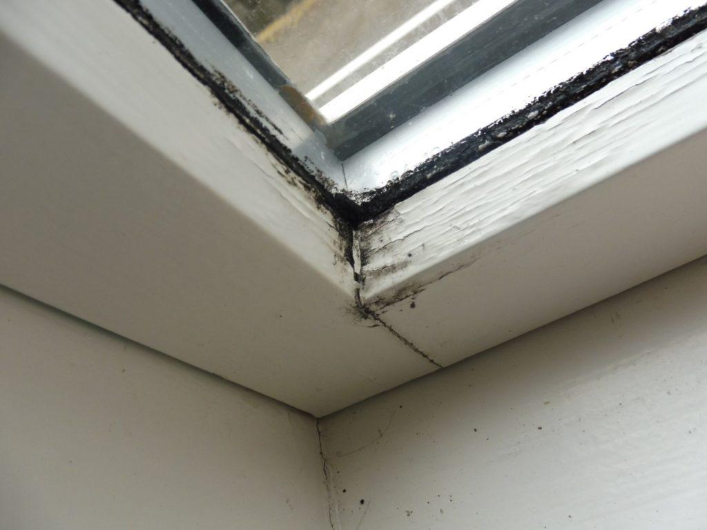 skimmelsvamp-vindue